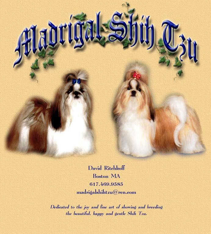 Madrigal Shih Tzu Homepage