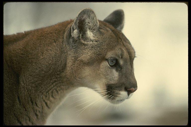Index Of Eugenef Animal Images