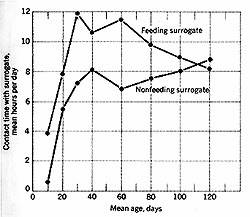 Graph of 'Contact Time with Surrogates'